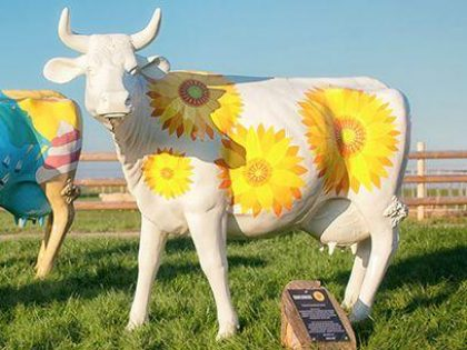 Image of the Sunflowers Cow