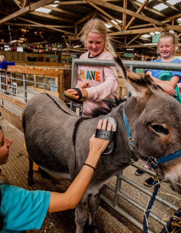 TFP hands on donkey brushing