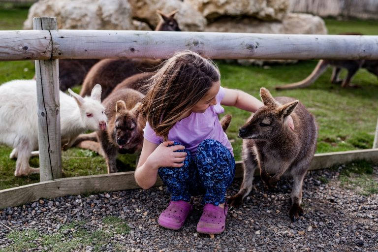 TFP making new friends wallaby enclosure